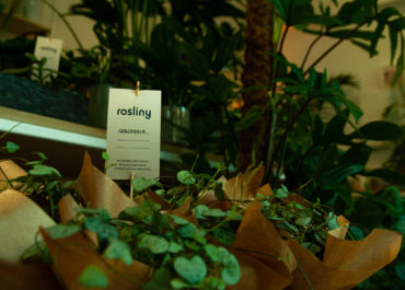 gdzie kupić rośliny doniczkowe we Wrocławiu?